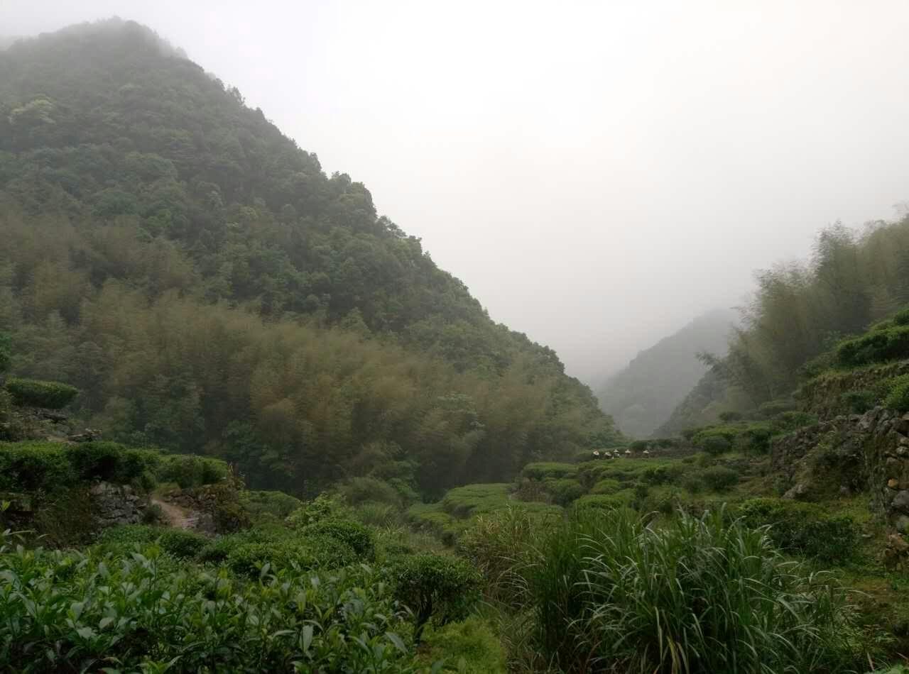 醉美:品不尽的茶山与茶乡