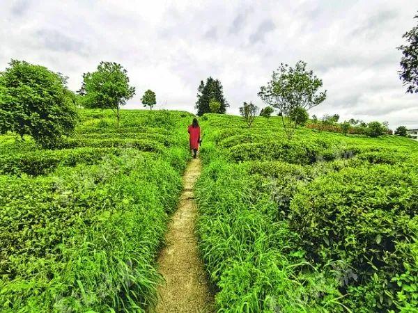 都匀18个茶产业招商项目成功签约